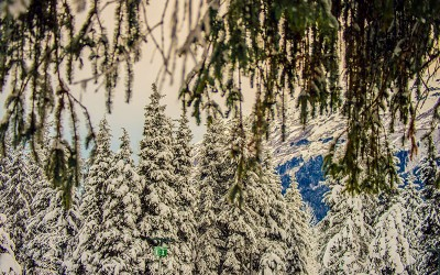 Snowy Day : Girdwood, Alaska