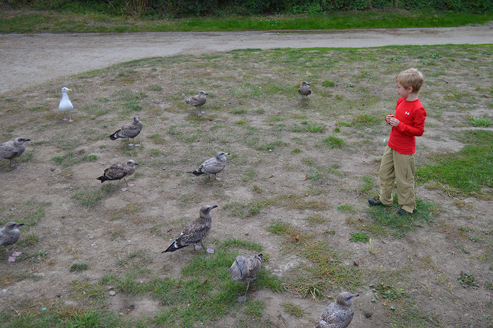 Feeding the Birds 3